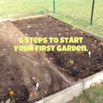 6 Steps to Start Your First Garden
