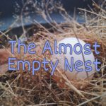 The Almost Empty Nest- What's Mama to do when the kids leave home?