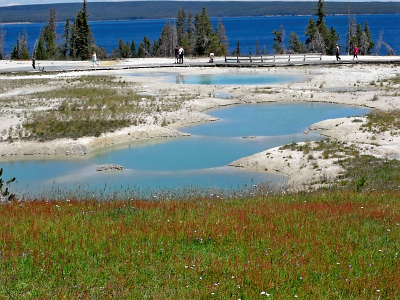 Sulphur Pools Yellowstone